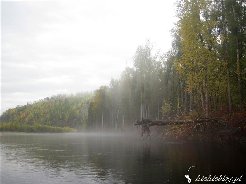 Syberia Tajmienie w deszczu_1